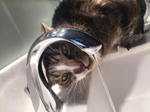 http://cat%20drinking%20water